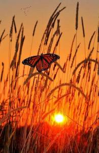 Butterfly. Water, and Weeds at Sunset