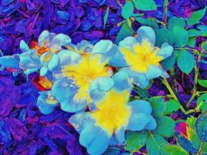 Roses in a Florida Garden Regina MJ Kyle 2014