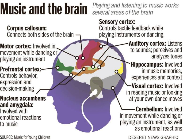 how playing an instrument benefits our brain! — steemit