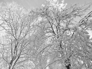 White on White, Winter Series 2016 Copyright Regina MJ Kyle
