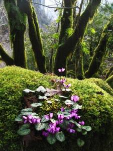 Courtesy of Old Moss Woman's Secret Garden